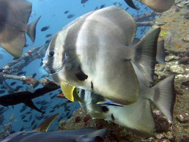 Picture copyright: BB Divers Koh Chang