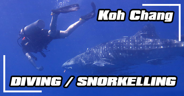 Diving and snorkelling in Koh Chang